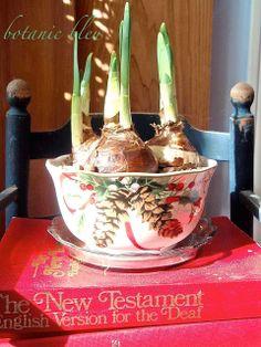Botanic Bleu: Christmas Greenery 2013