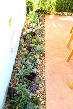 Succulent and herb patio garden
