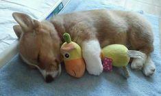 Eläinpienokaiset ovat nukahtaneet – suloisuus tuplaantuu, kun näemme minkä kanssa ne nukkuvat - Arvostettu