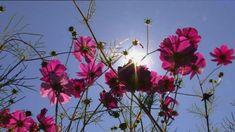 Planten groeien recht naar boven in de richting van het licht. Ook als je een plantje op z'n zij legt.
