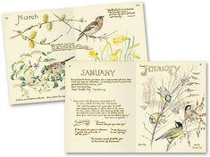 lovely idea paint a border using edith holden's nature journal as inspiration