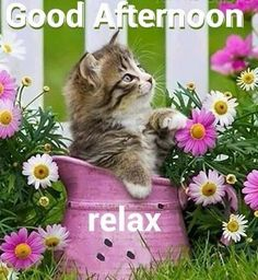Good Afternoon sister,have a relaxing Afternoon xxx ❤❤❤ Kittens And Puppies, Baby Kittens, Kittens Cutest, Cats And Kittens, Big Cats, Good Afternoon Quotes, Good Morning Good Night, Gud Afternoon, I Love Cats