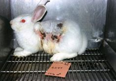 """Help Ban Sales of Animal-Tested Cosmetics   Take Action   On 5/5/14, India published a draft notice to amend the Drugs & Cosmetics Rules, to include rule 135-B, which states, """"135-B. Import of cosmetics tested on animals prohibited. No cosmetic tested on animals shall be imported."""" The ban means products dripped into animals' eyes, smeared on their abraded skin, sprayed in their faces or forced down their throats in other countries will no longer be sold on store shelves in India…"""