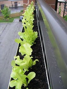 Gutter Garden: Hang Gutters on railings on small balconies and use as planters (with proper drainage etc) - modify idea for herb wall