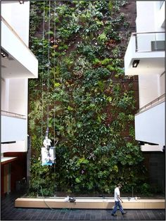 Gallery of Greenery - Green Plants for Green Buildings