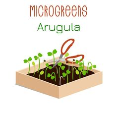 Grow microgreen in a box with soil. Cutting the harvest with scissors. Chinese Cabbage, Buckwheat, Vegan Recipes, Vegan Food, Packaging Design, Harvest, Illustration, Projects, Scissors