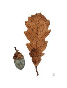 chestnut oak by Golly Bard, via Flickr