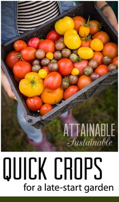 """Think you've missed your chance to get a garden in the ground? Maybe not! These crops are all quick to mature, meaning that even if you've missed your """"suggested"""" planting date, you can harvest a crop this year. Go you!"""