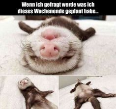 Cute Funny Animals, Funny Cute, Hilarious, Funny Shit, Funny Memes, Funny Stuff, Animals And Pets, Baby Animals, Funny Ferrets
