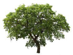 20 Livre Árvore Imagens PNG