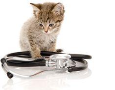 Vétérinaire à Domicile Rive Nord Rive Nord, Garlic Press, Cats, Animals, Gatos, Kitty Cats, Animaux, Animal, Cat