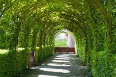 castle garden with a path and tree arches