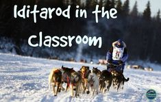 Every year the Iditarod is my students' favorite unit.  It's engaging and educational at the same time!