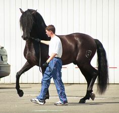 Image detail for -File:Andalusian horse moscow.jpg - Wikipedia, the free encyclopedia
