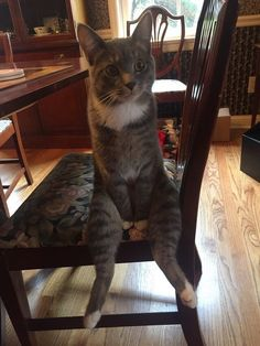 Take a Seat and Enjoy This Photoshop Battle Inspired by a Weird Cat Sitting With His Legs Out - Cheezburger