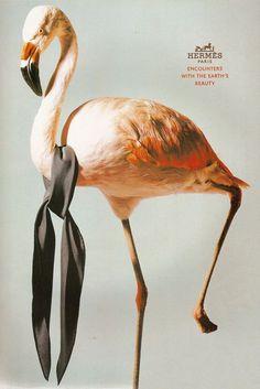 flamingo advert - Google Search