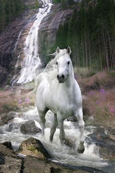 Horse ~ White walking in stream