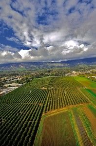 First the Mission, then the water, then the ranchos. and Ventura agriculture is off and running. Part 2 of our history of Gold Coast Agriculture. Oxnard California, California Homes, Sea To Shining Sea, Ventura County, Close To Home, Organic Farming, Gold Coast, The Great Outdoors, Country