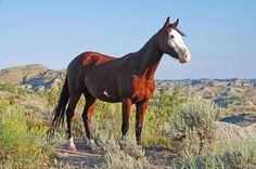 The Best Places to See Wild Horses in North America | Travel | Smithsonian