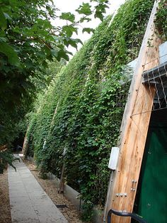 Green Wall Systems at St Dominic's College, Harrow by Jakob