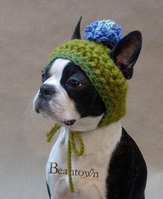 perro sombrero-02