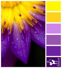 Purple & Yellow Burst - Purple, Lilac, Yellow - Designcat Colour Inspiration Pallet