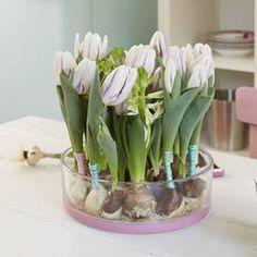 Tolle Ideen für eine frische Frühlingsdeko mit Zwiebelblumen