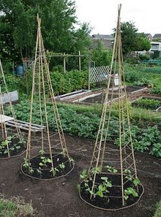 Lillbutton's Farm: Bean Teepees