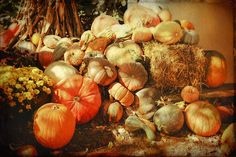 #SALE - 15% off everything. #Art you love, printed just for you. Use code YOURTHING15.  I took the original photograph at the Great Pumpkin Patch in Arthur, Illinois, where a large population of Amish live and work. I then added a background and overlayed a texture to give it an aged look. • Buy this artwork on apparel, stickers, phone cases, and more.