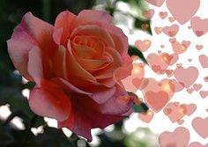Rose, Herz, Liebe, Glück, Abstrakt