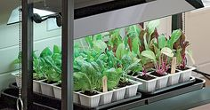 Grow lights are perfect for indoor seedstarting.