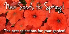 Park Seed is one of America's top choices for seeds, plants, vegetables, garden supplies & more. Shop online for high-quality seeds to start growing your garden today! Plant Companies, My Flower, Flowers, Seed Catalogs, Gardening Supplies, Planting Seeds, Flower Seeds, Bulb, Park