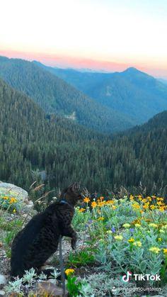 Washington States Best Hikes: Mount Rainier National Park