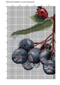 Gallery.ru / Фото #2 - черноплодная рябина - irisha-ira