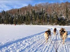 Dogsledding in Mont Tremblant, Montreal