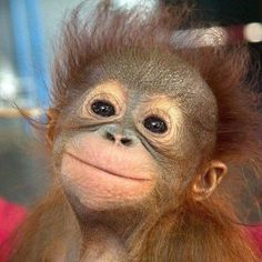 monkey                                                                                                                                                                                 Mehr