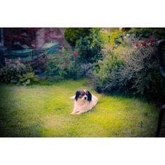 #canon #lights #ig_mood #travel #perfect #photografer #canon_official #ig_photooftheday  #igglobalclub #mood_family #igfotografer #myphototime #ig_great_pics #throughmyeyes #ig_photolove #dog #puppy #animal #cute