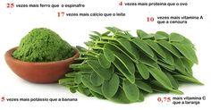 Estudo mostra que esta planta pode curar vários tipos de câncer, incluindo…