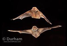 Michael Durham Photography - www.DurmPhoto.com