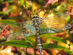 Winged wonder: A dragonfly by Oliver Naish, 14, from Bristol