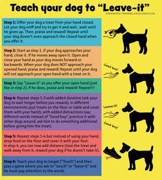 Training Your Dog to Leave It Step-by-Step Guide