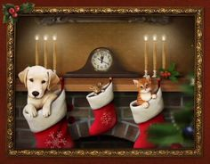 A Magical Time - Personalized Puppy, Kitten, and Mouse Christmas Card Hope you enjoy this twinkling, sparkling, wonderful time of the year... when shining magic is found on every Christmas tree -- and in every happy heart. Merry Christmas