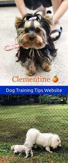Diy Dog Training