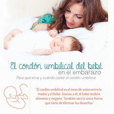 Mi Pediatra y Familia -  El cordón umbilical del bebé en el embarazo #mipediatrayfamilia #queremosniñossaludables