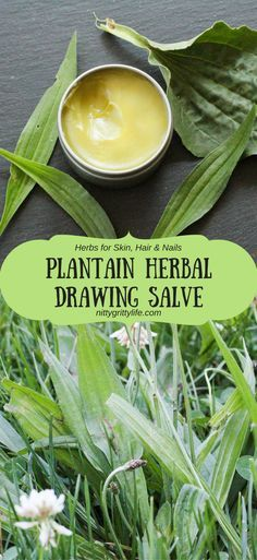 Plantain is an herb with many uses. Make this plantain infused drawing salve to relieve all your bug bites, bee stings, slivers, and rashes. (scheduled via http://www.tailwindapp.com?utm_source=pinterest&utm_medium=twpin&utm_content=post189239299&utm_campaign=scheduler_attribution)