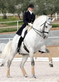 CDE (Spanish Sport Horse) They usually keep some of PRE morphology, but warmbloods make them taller with longer legs and stronger for sport disciplines like dressage or jumping.