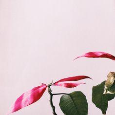 #selfart #pink #flora
