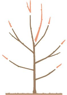 pflaumenbaum richtig schneiden konyhakert pinterest garden garden plants and plants. Black Bedroom Furniture Sets. Home Design Ideas