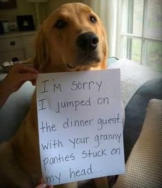 Absolutely Hilarious Dogshaming Signs - dog shaming, dogshaming I'm sorry i jumped on the dinner guest with your granny panties stuck on my head.I'm sorry i jumped on the dinner guest with your granny panties stuck on my head. Funny Animal Pictures, Funny Animals, Cute Animals, Funny Photos, Funny Images, Animal Pics, Pictures Of Cute Dogs, Wierd Pictures, Funniest Photos