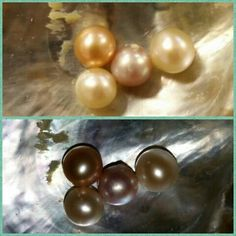 The joy of finding your very own pearl! Pearl Party, Oysters, Finding Yourself, Pearl Earrings, Parties, Joy, Pearls, Gemstones, Jewelry